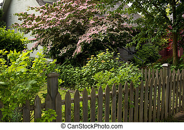 Pink tree in garden - Pink tree in the shaded garden and...