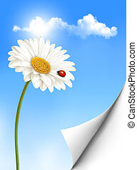 Nature summer background with daisy flower with ladybug. Vector illustration.
