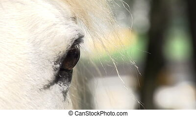 Sad Sight Horse - White horse stares into the camera Eyes...