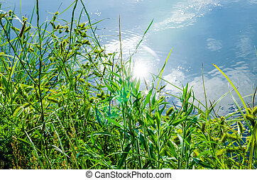 green plants by the remote lake
