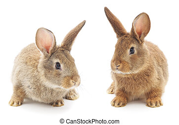 Rabbits - Isolated image of a two bunny rabbits.