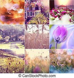 Flowers collage - Spring flowers collage