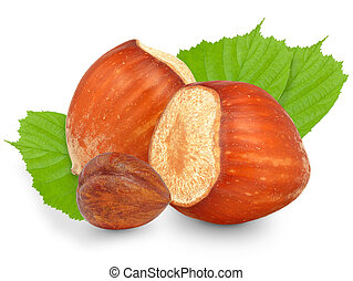 hazelnut in the shell on a white background