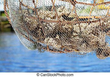 mar, esponjas
