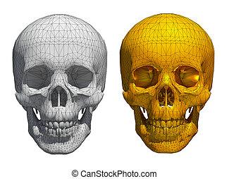 3d White and golden skull wireframe