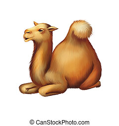 The domestic camel resting, laying on the ground , Isolated...
