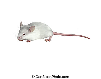 White child cute mouse on white background