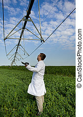 Agronomist in peas field - Agronomist in white coat standing...
