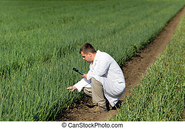 Agronomist in onion field - Agronomist in white coat looking...