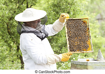 Working apiarist inspecting the hive