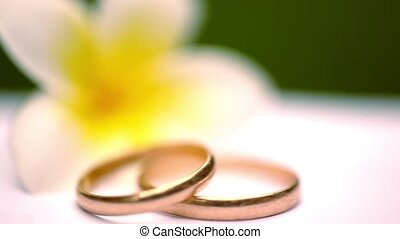 Close up wedding gold rings on the Thai flowers frangipani. Macro video shift motion