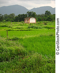 Village landscape - A beautiful village landscape with green...