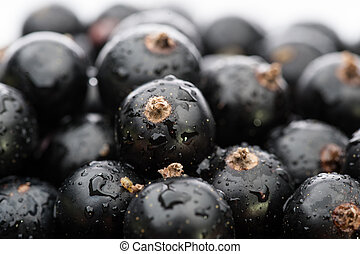 black currant background - fresh black currant berries...
