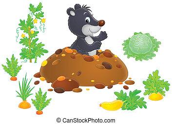 Mole in a kitchen garden