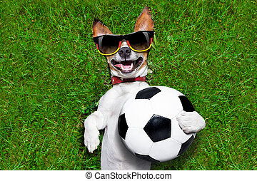 funny german soccer dog - german soccer dog holding a ball...