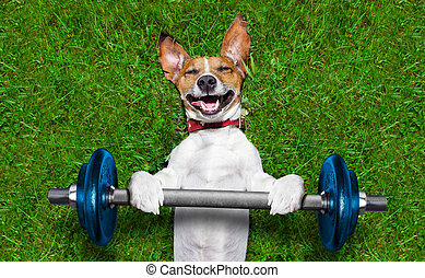fitness dog - super strong dog lifting bing blue dumbbell...