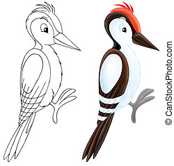 Woodpecker - woodpecker, color illustration and black and...