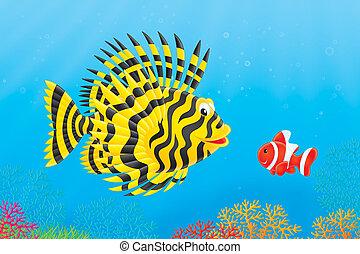 Scorpion-fish and anemonefish - Scorpion fish and anemone...