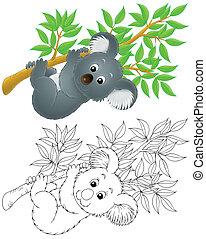Koala - slow-moving Australian koala bear hanging on a...