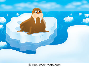 Walrus - walrus lying on the drifting ice floe