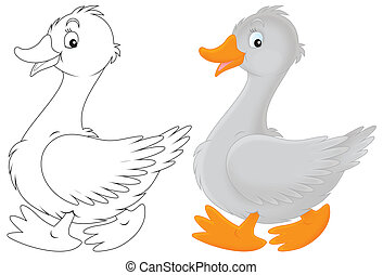 Goose - Grey goose walking, color illustration and black and...