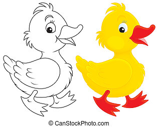 Duckling - Yellow duckling walking, color illustration and...