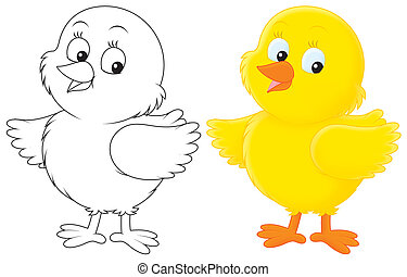 Chick - Yellow chick, color illustration and black and white...
