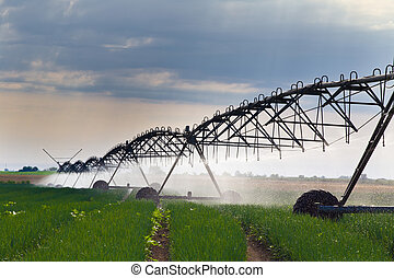 Irrigation of onion field - Onion field irrigated by a pivot...