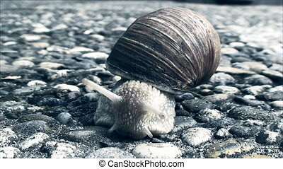snail crawling on the concrete sidewalk