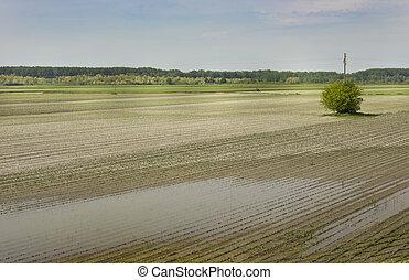 Flood in field - Landscape of flooded corn field in plains
