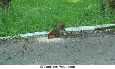 squirrel eats the feed - nice eats the feed in the park