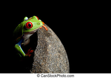 frog behind rock isolated on black