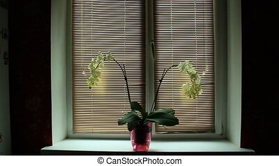 blossoming orchid in office - two branches of a blossoming...