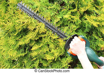 Hands of woman with a gas powered hedge trimmer - Hands of...