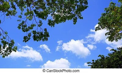 White Clouds in Blue Sky through Green Foliage. Beautiful...