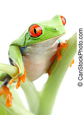 frog on plant isolated