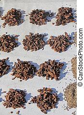 Star Anise, Illicium verum Hooker fil, Illiciaceae