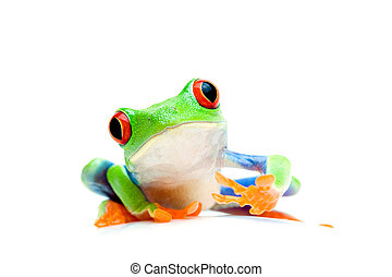 frog curious isolated on white - frog curious and sitting on...