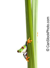 frog on plant isolated white