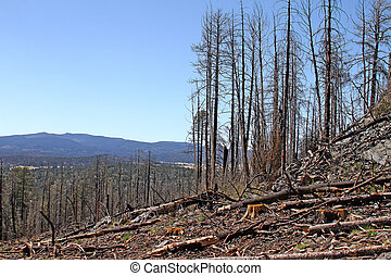 Big Lake Lookout after Wallow Fire - Remains of the pine...