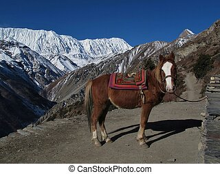 Horse and Tilicho Peak, Annapurna Conservation Area, Nepal