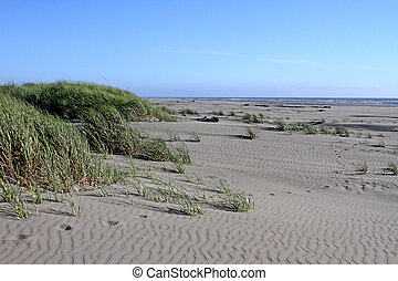 Beach at Ocean Shores, WA