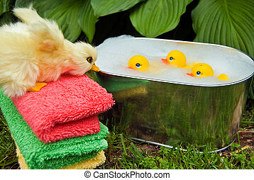 Summer Spa - Rubber toy ducks in a tub with duckling on...