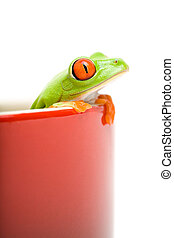 frog looking out of cooking pot - frog looking out of red...