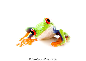 frog is curious - frog curiously looks into camera - a...
