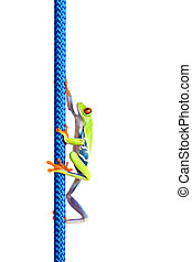 frog climbing up rope isolated on white - frog climbing up a...