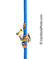 frog on a rope isolated white - frog hanging on a rope - a...