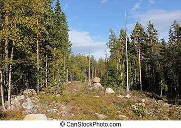 Rocky Forest Clearing - Forest clearing with rocks in...