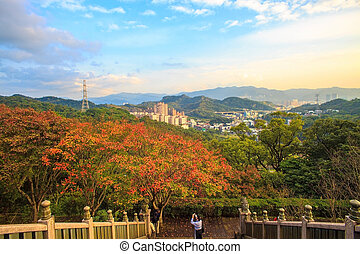 Beautiful maple place, Taiwan for adv or others purpose use