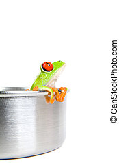 frog on cooking pot isolated - frog in a cooking pot - a...